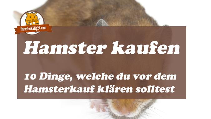 Hamster kaufen worauf achten