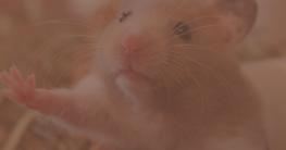 Hamsterkäfig artgerecht größe