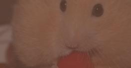 Hamsterkäfig einrichten Streu