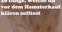 Hamsterkauf 10 Dinge