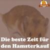 Hamsterkauf Zeit