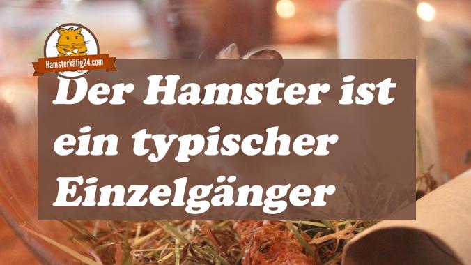 Hamster Einzelgänger paarweise halten