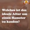 Hamster kaufen Alter