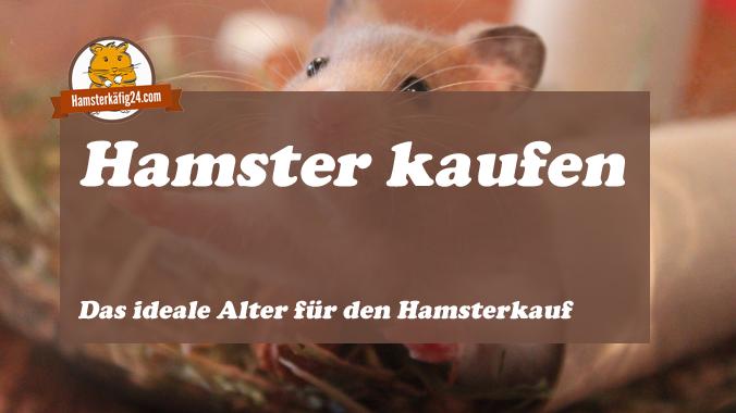 Hamster kaufen ideales Alter